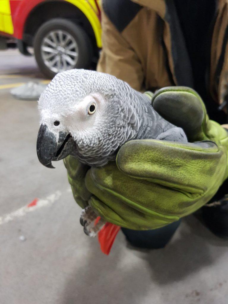dublin airport parrot