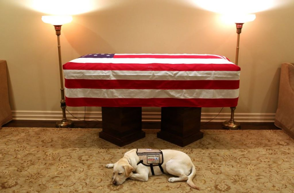 George HW Bush's devoted service dog Sully is now helping wounded veterans