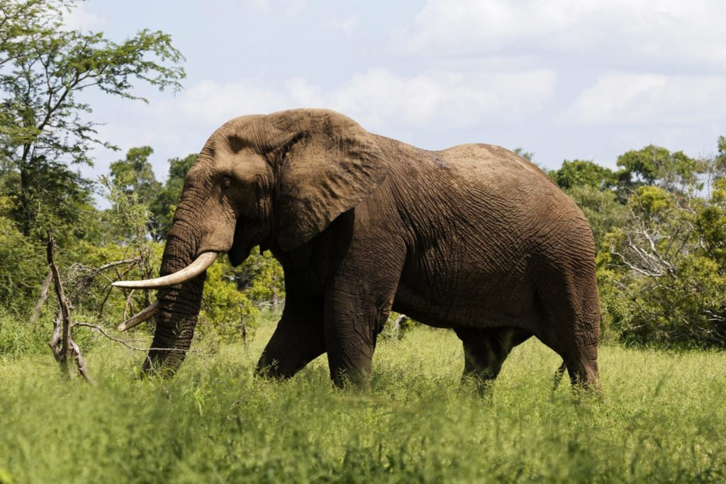 suspected poacher killed by elephant