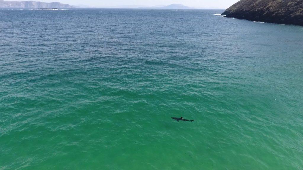 Achill Island Basking Shark