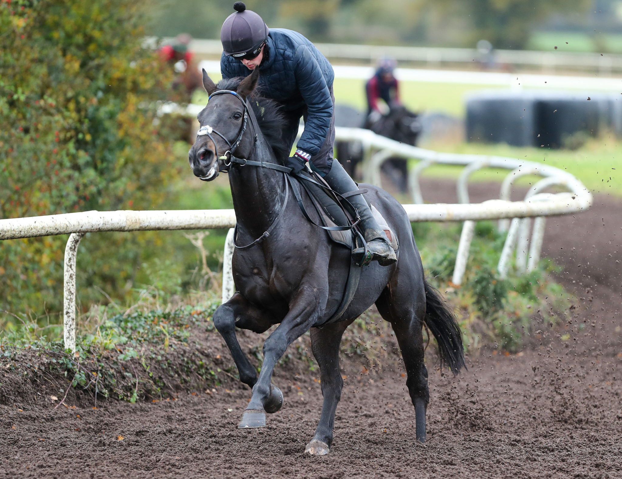 Willie Mullins trained Ferny Hollow