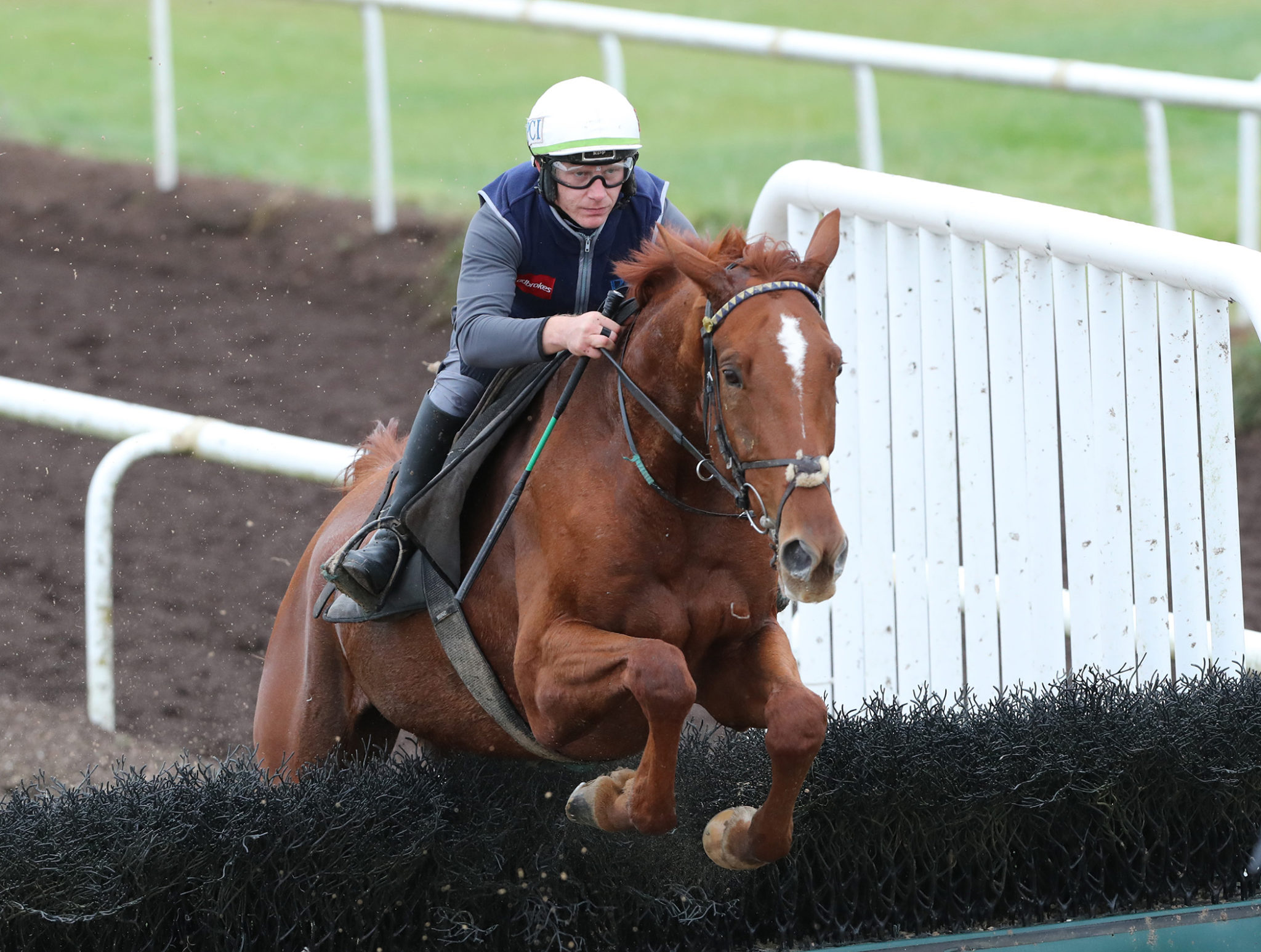 Willie Mullins trained Monkfish