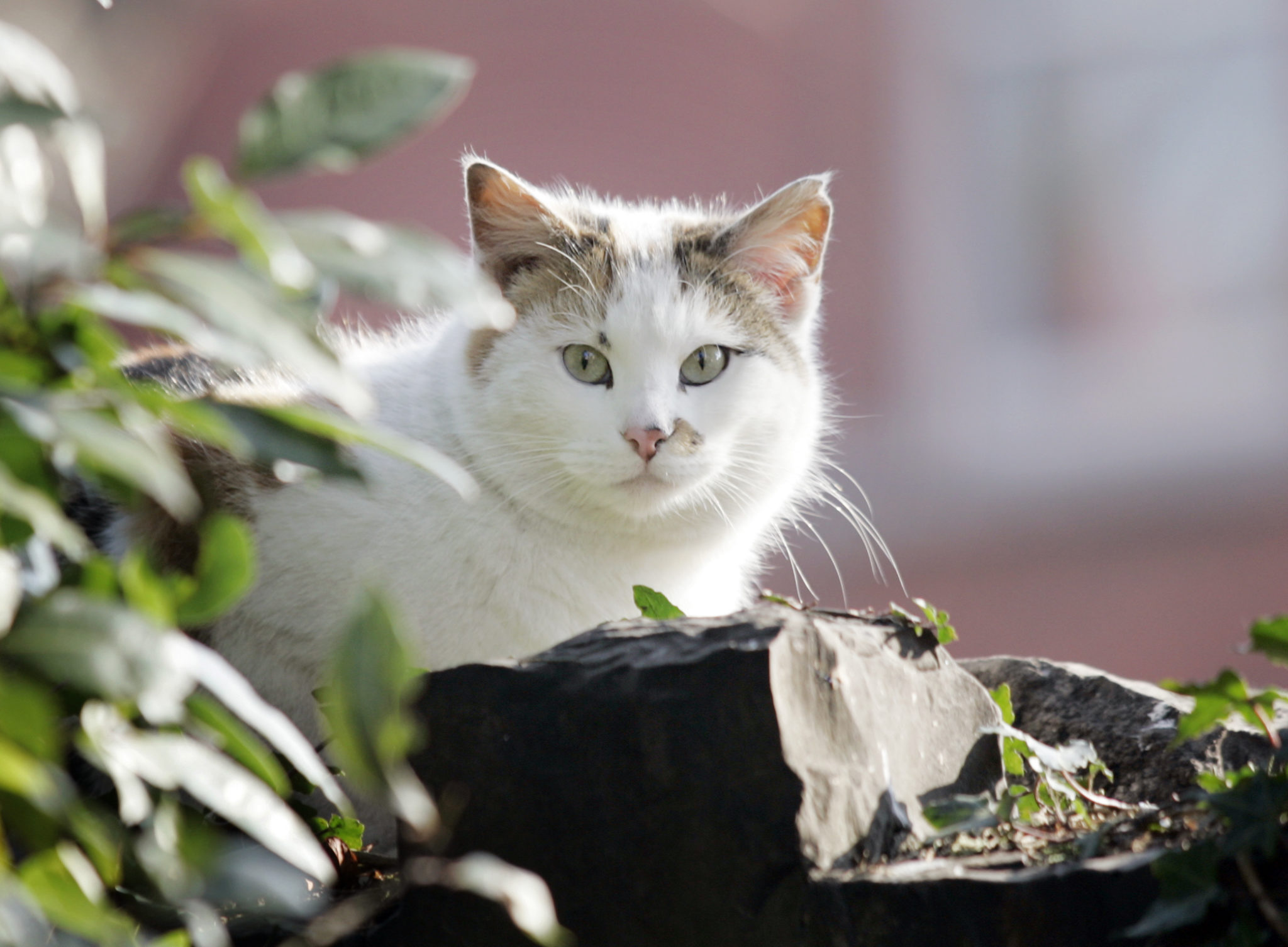 A neighbourhood cat enjoys the springtime sun