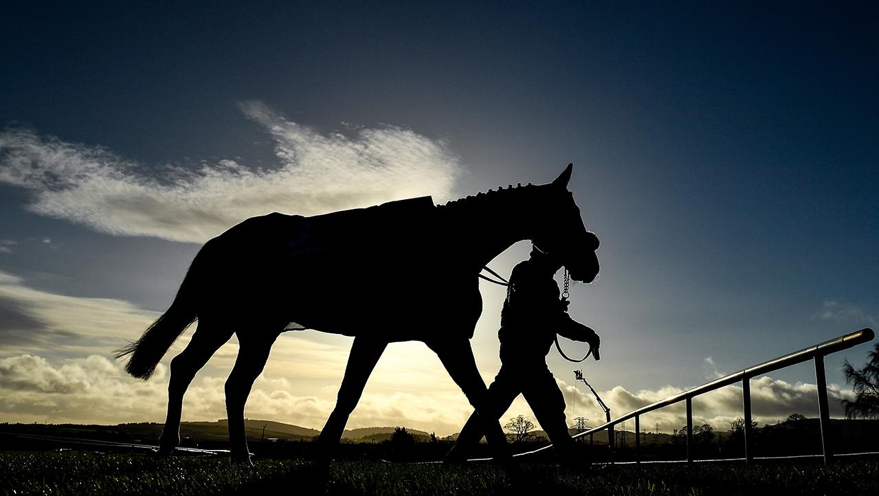 Horse training generic