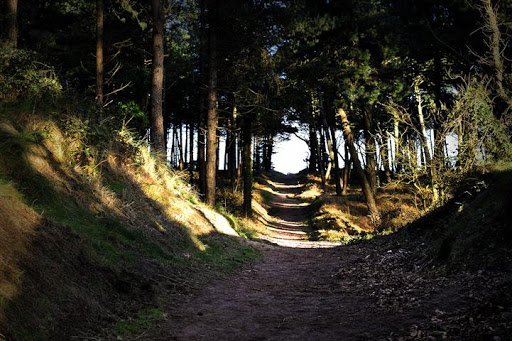 Raven Point Wood. Image: Visit Wexford