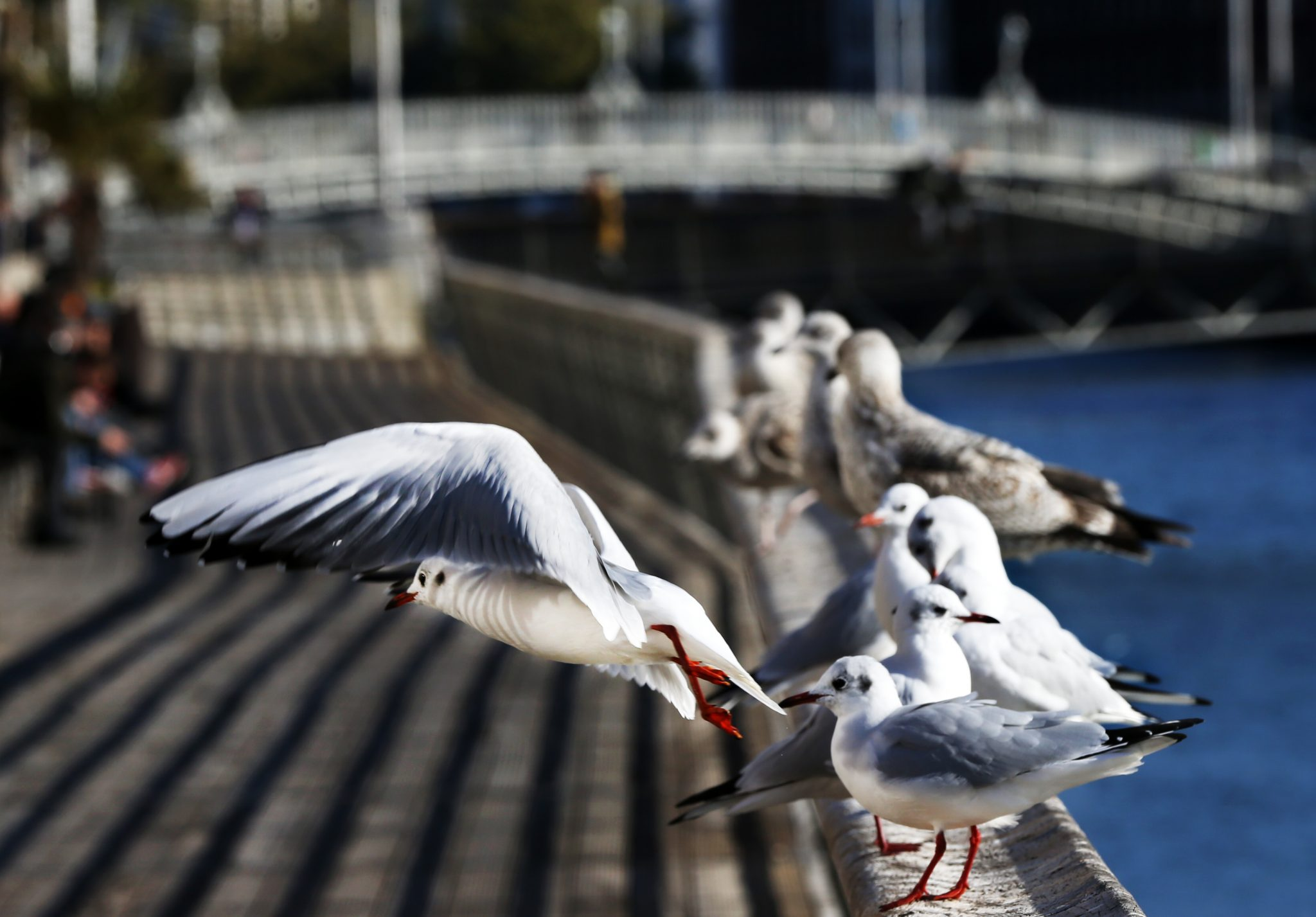 Seagulls on the Dublin Quays, 05-06-2021. Image: Sam Boal/RollingNews