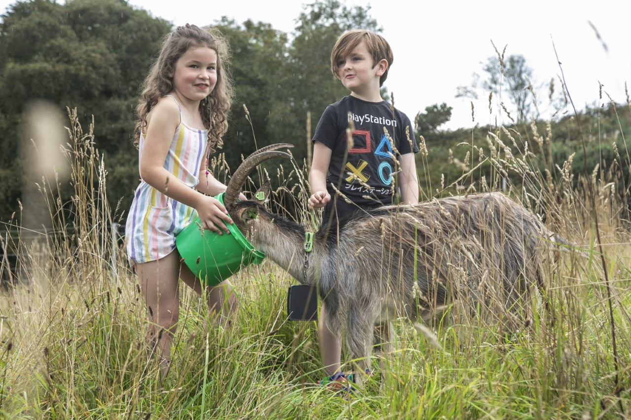 Children feed the firefighting goats on Howth Head. Image: Orla Murray/Coalesce